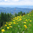 Alpine meadow in spring (Switzerland) — Zdjęcie stockowe