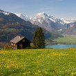 Alpine meadow in spring - Stock Photo