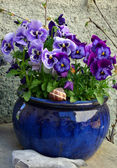 Flowers in the ceramic pot — Stock Photo
