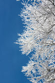 Tree branches covered with hoarfrost — Stock Photo