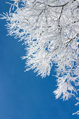 Tree branches covered with white frost — Stock Photo