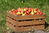 Red apples in a wooden box — Stock Photo