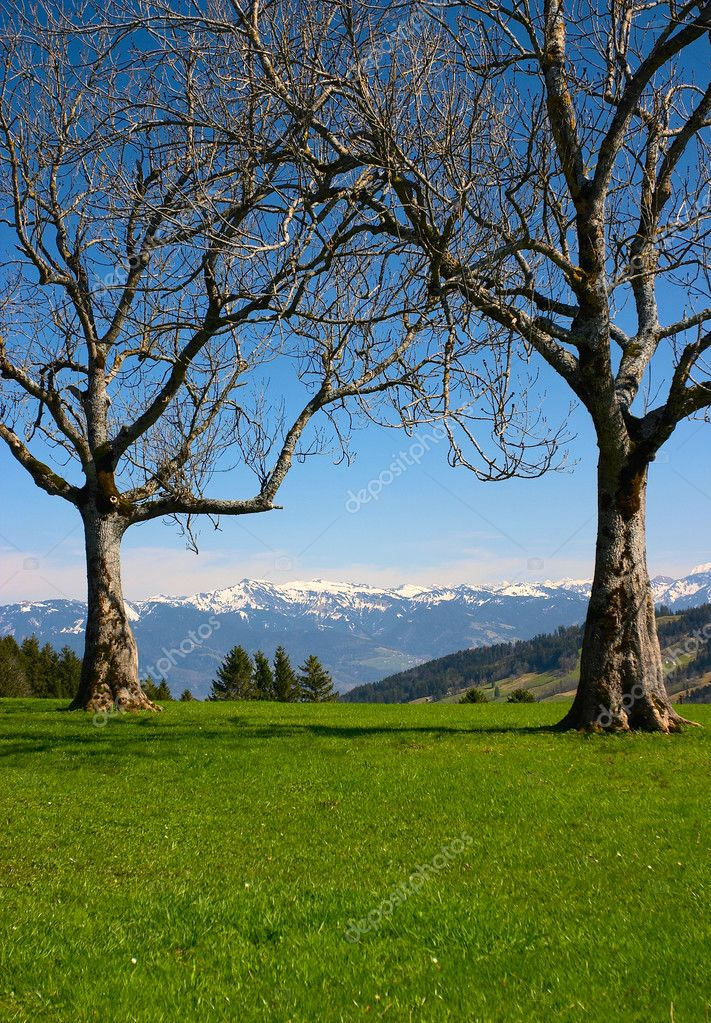 Two dry trees in mountains (Switzerland) — Stock Photo #1803410