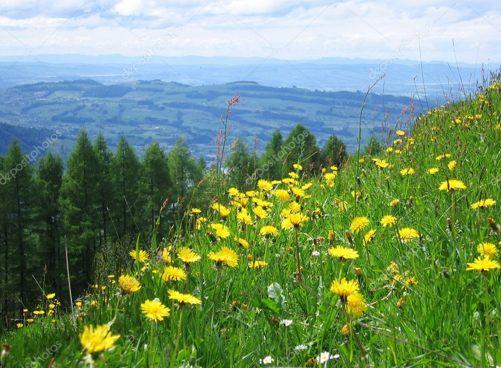 Alpine meadow in spring (Switzerland) — Stock Photo #1803764
