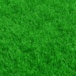 Fresh spring green grass background — Stock Photo