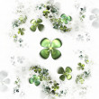 Four leafed clovers on white, shamrock — Stock Photo