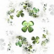Stock Photo: Four leafed clovers on white, shamrock