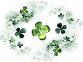 Four leafed clovers, shamrock — Stock Photo