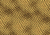 Reptile skin texture background — Stock Photo