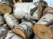 Kategoria: birch — Zdjęcie stockowe