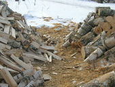 Billets and stumps — Stock Photo