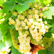 Bunch of white grapes — Stock Photo #2137971