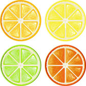 Citrus set — Stock Vector