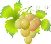 Grape — Vector de stock