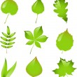 Set of isolated vector leaves. - Stok Vektr
