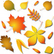 Autumn leaves — Stock Vector #1926532