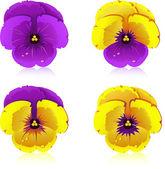 Viola, flowers, isolated. EPS 8, AI, JPEG — Stock Vector