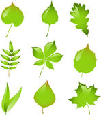 Set of isolated vector leaves. — Stockvector