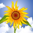 Sunflower on the sky — Stock Vector