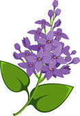 Lilac branch — Stock Vector
