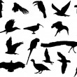 Stock Vector: Various birds silhouettes