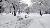 Winter park covered in snow — Stock Photo