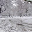 Stock Photo: Winter park path