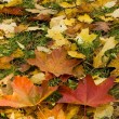 Stock Photo: Autumn leaves in Poland
