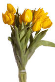 Montón de tulipanes amarillos — Foto de Stock