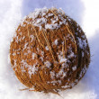 Coco nut in the snow — Stock Photo
