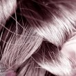 Human Hair - Close Up — Stock Photo