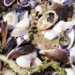 Stock Photo: Mussels