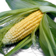 Stock Photo: Maize Backgropund