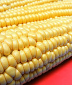 Corn On Red Backgound — 图库照片