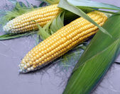 Corn On Gray Backgound — Stok fotoğraf