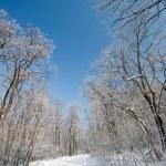 Frozen winter forest — Stock Photo #1831668