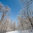Frozen winter forest — Stock Photo