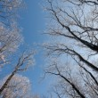 Frozen winter forest and sky — Stock Photo