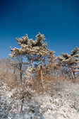 Frozen winter forest — Stock Photo