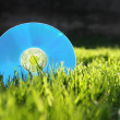 Compact disk on grass — Stock Photo