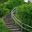 Stock Photo: Stairs in forest
