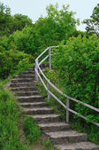 Stairs in the forest — Stock Photo