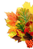 Leaf of autumn — Stock Photo