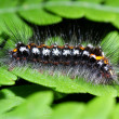 Caterpillar — Photo