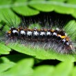 Caterpillar — Stockfoto