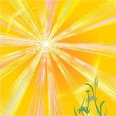 Hot sun of summer — Stock Vector