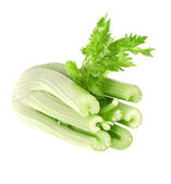 Fresh celery — Stock Photo