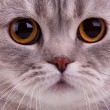 Closeup of cats face — Stock Photo