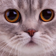 Stock Photo: Closeup of cats face
