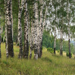 Birch round dance with singing on a flow — Stock Photo